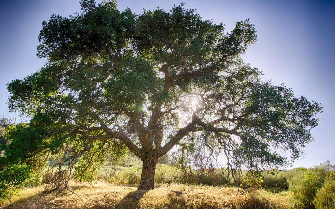 Christian Education Video: Zacchaeus
